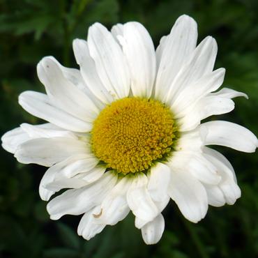 Flora Carpatilor 8