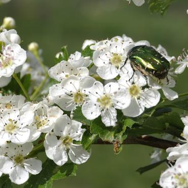 Flora Carpatilor 3